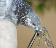 la calidad del agua