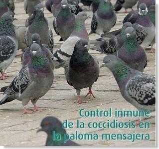 coccidiasis en aves