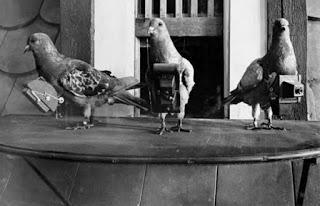 palomas y fotografia aerea