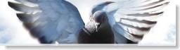 exposilesia feria internacional de palomas
