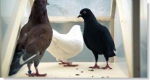 excrementos de paloma