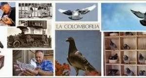 manual de colombofilia
