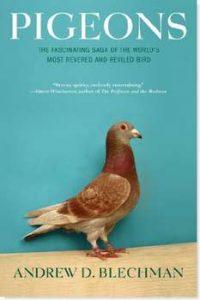 pigeons-andrew-blechman