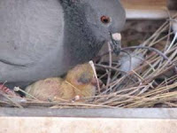 el palomar en marzo