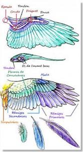 calidad de las plumas de paloma