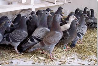 el palomar en abril
