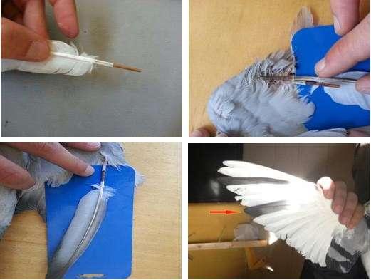 como reparar pluma rota