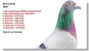 precio récord por una paloma mensajera