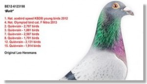 venta de palomas mensajeras