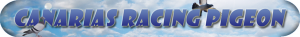 canarias racing pigeons