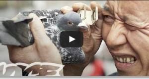 carreras de palomas en china
