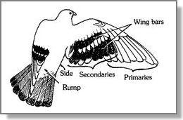 retrasar la muda de las plumas