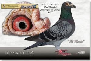 fotopichón - fotografia de palomas