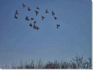 el olfato en la orientación de las palomas