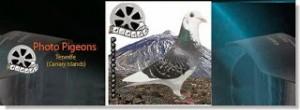 photo-pigeons