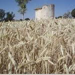 palomar tradicional tierra de campos