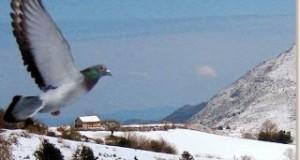 el palomar en invierno
