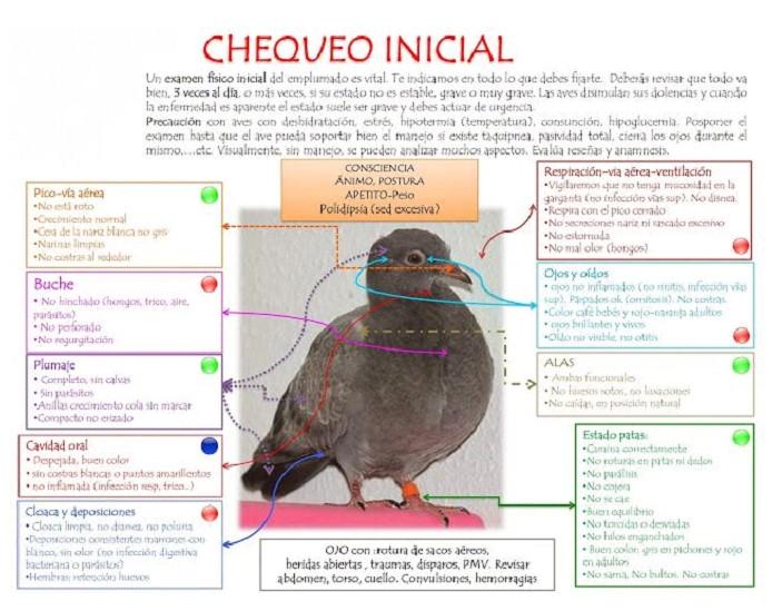chequeo-paloma-rescatada
