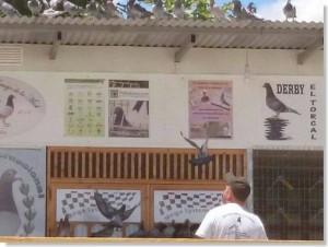 derby intenacional costa del sol final 2014