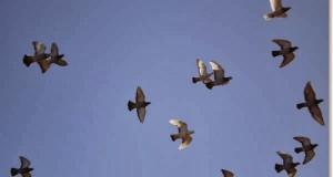 vuelo en bando