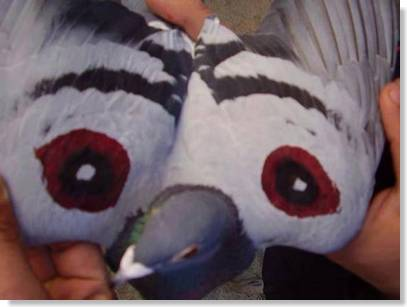 palomas y halcones
