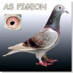fotografia de palomas