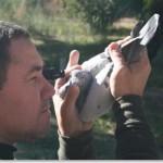 teoria del ojo de la paloma mensajera