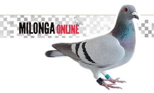 milonga online cálculos colombófilos