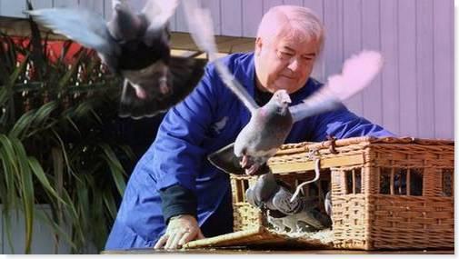 palomas-mensajeras-para-controlar-contaminacion-londres