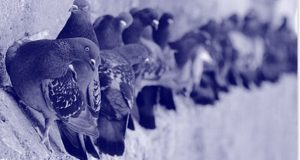 como-alejar-palomas-de-tu-casa
