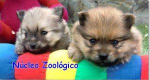 nucleo-zoológico de perros