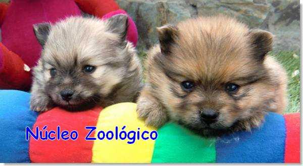 núcleo zoológico